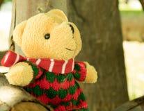 Orso sveglio dell'orsacchiotto Fotografia Stock