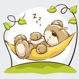 Orso sveglio di sonno Fotografia Stock Libera da Diritti