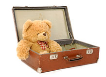 Orso in una valigia Fotografia Stock