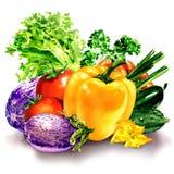 Ortaggi freschi, composizione con pepe crudo, melanzana, pomodoro, cetriolo, insalata, prezzemolo, illustrazione dell'acquerello Immagini Stock