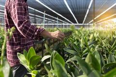 Ortaggi freschi dell'agricoltore, concetto agr di produzione alimentare di agricoltura Immagini Stock Libere da Diritti