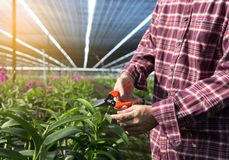 Ortaggi freschi dell'agricoltore, concetto agr di produzione alimentare di agricoltura Immagini Stock