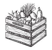 Ortaggi freschi in scatola Illustrazione disegnata a mano Fotografie Stock Libere da Diritti