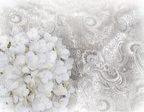 Ortensia bianca sulla tappezzeria bianca fotografia stock libera da diritti