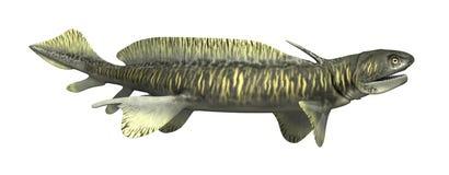Orthacanthus - Voorhistorische Haai Royalty-vrije Stock Foto