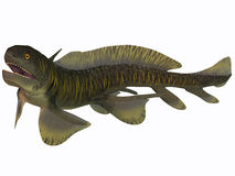 Orthacanthus on White. Orthacanthus was a Devonian freshwater shark that thrived in Carboniferous swamps and bayous in Europe and North America Stock Photo
