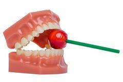 Orthodontic vita tänder modellerar använt i tandläkekonst som rymmer den röda klubban white för tand för sund hygien för bubblabe arkivfoton