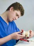 Orthodontist bei der Arbeit Stockfotos
