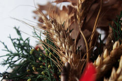 Orthodox Christmas. Wheat and oak branch, Orthodox Christmas tradition in Serbia royalty free stock image
