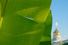 Orthodox church and banana leaf Royalty Free Stock Photography