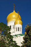 The Orthodox church dome surrounded by trees stock photography