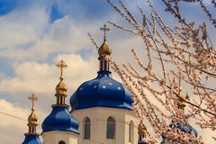 orthodox church domes against blue sky blooming apricot branch Royalty Free Stock Photos
