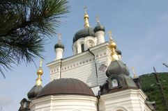 Orthodox church and pine tree in daytime stock photography