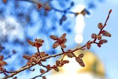 Orthodox Easter holiday. Happy Day Bright Easter! Willow branches against a background of blue sky and golden domes of the church. Closeup. Palm Sunday. Spring stock image