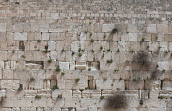 Orthodox Jewish Man prays at the western wall Stock Photography