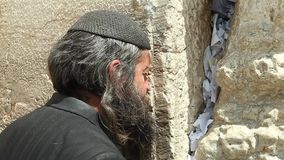 Orthodox Jewish Man prays at the western wall stock video