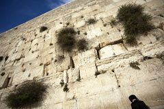 Praying at the Wailing Wall Royalty Free Stock Image