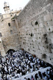 Orthodox Jewish Pray at Western Wall Stock Image