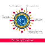 Orthomyxoviridae 病毒的分类 库存照片