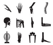 Orthopedic and spine icon set on white background. Orthopedic and spine icon set on white background, bone x-ray image of human joints, anatomy skeleton flat Royalty Free Stock Photography