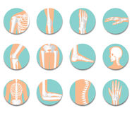 Orthopedic and spine icon set on white background Stock Photography