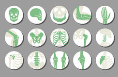 Orthopedic and spine vector icons. Human bone of illustration and anatomy skeleton bone x-ray image Royalty Free Stock Photo
