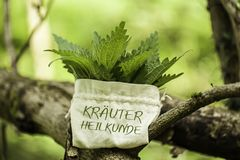 Ortica bruciante con la parola Kräuterheilkunde Immagini Stock