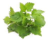Ortica di verde delle foglie Fotografia Stock