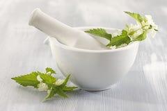 Ortica-pianta bianca medicinale fotografie stock