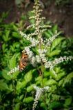 Orticaria della farfalla sul fiore Immagine Stock Libera da Diritti