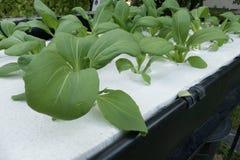 orticoltura nell'azienda agricola di coltura idroponica con il solenoide liquido del fertilizzante Fotografia Stock Libera da Diritti
