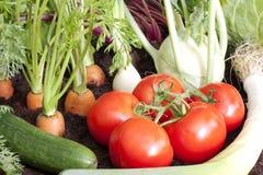 Orticoltura organica nel giardino Immagini Stock Libere da Diritti