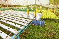 Orticoltura verde nella scuola materna, agricoltura di coltura idroponica Fotografia Stock Libera da Diritti