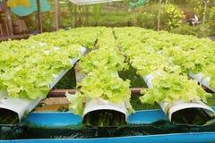 Orticoltura verde nella scuola materna, agricoltura di coltura idroponica Immagine Stock Libera da Diritti