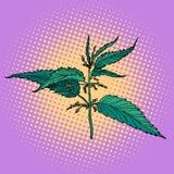 Ortie, usine brûlante verte illustration stock
