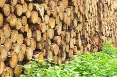 Orties cuisantes près de tas de bois dans la forêt photo libre de droits