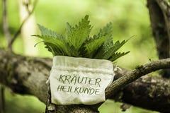 Ortiga tacaña con la palabra Kräuterheilkunde Imagenes de archivo