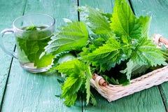 Ortigas de la planta medicinal: hojas frescas e infusión imagenes de archivo