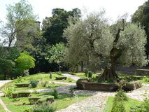 Orto Botanico e Medievale, Perugia (Italia). The Medieval Garden ( Agrarian University of Perugia ) of the St. Pietro Basilica in Perugia, Umbria Royalty Free Stock Photography
