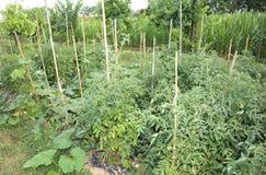 Orto con la coltivazione delle verdure e della frutta pl Fotografia Stock Libera da Diritti