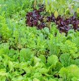 Orto del cortile ecologico Immagine Stock Libera da Diritti