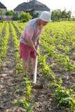 Orto di zappatura dell'agricoltore povero Immagine Stock