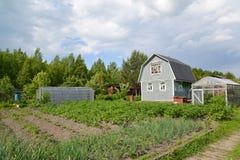 Orto domestico, casetta e serre su una sezione del paese Immagini Stock