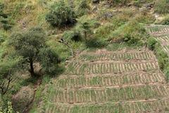 Orto ed agricoltura in Africa Fotografia Stock