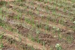 Orto ed agricoltura in Africa Fotografie Stock