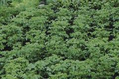 Orto nella fine dell'estate Erbe, fiori ed ortaggi nel giardino convenzionale del cortile Giardinaggio amichevole di Eco Fotografia Stock