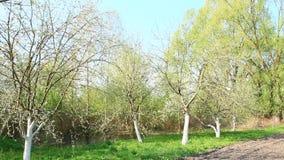 Orto prima della piantatura nel villaggio Apple fa il giardinaggio dietro l'orto video d archivio
