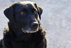 ?ortrait van een droevige hond stock afbeelding