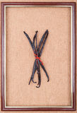 Рortrait of vanilla beans. Madagascar vanilla beans in the center of the frame on a linen background, tied with red twine Stock Photos