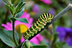 Oruga coloreada en hierba Imagen de archivo libre de regalías